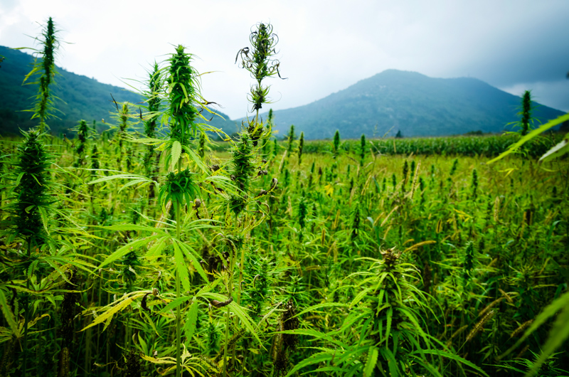 5_18 states allow medical Marijuana