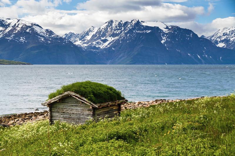 5_grass roofs