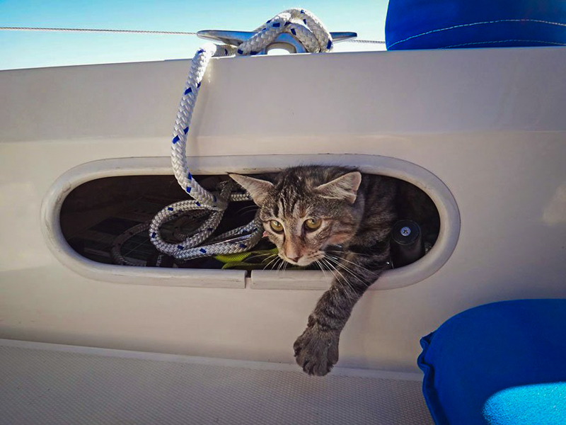 8_Couple Sails around world with their cat