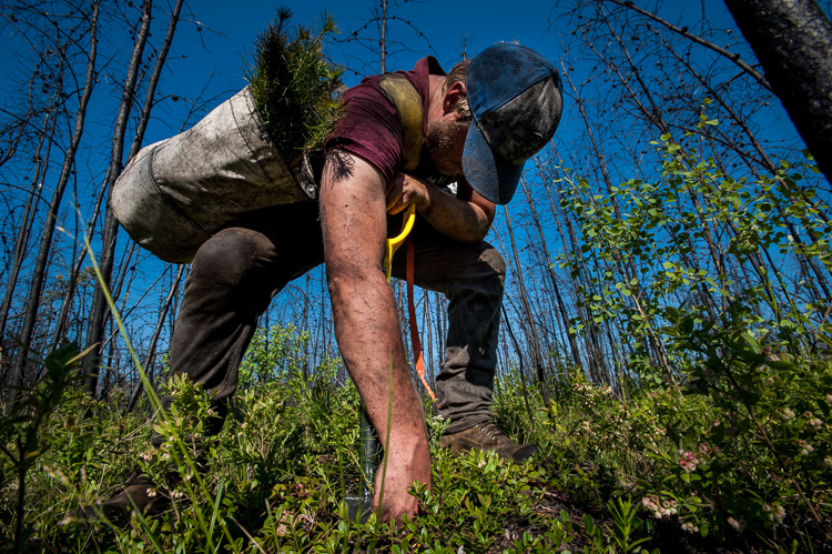 Planting trees in the forest will help you embrace your inner hippie