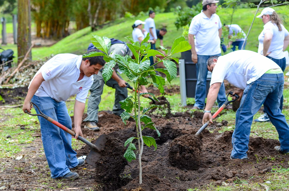 3_planting trees