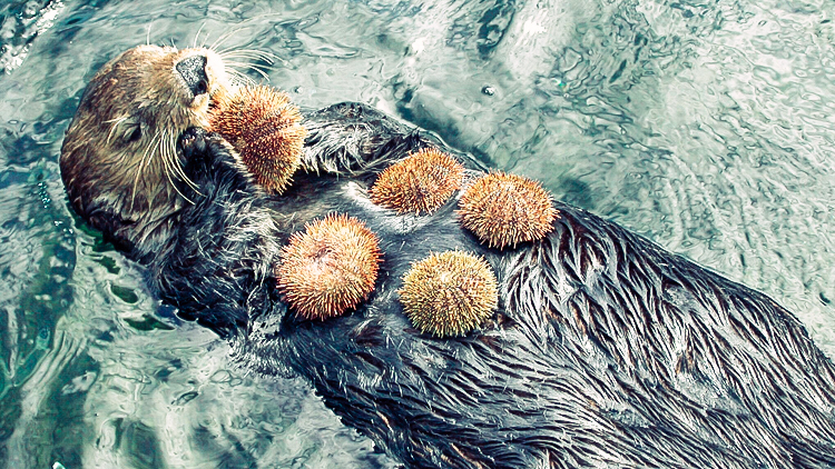 5_otters_lower carbon dioxide