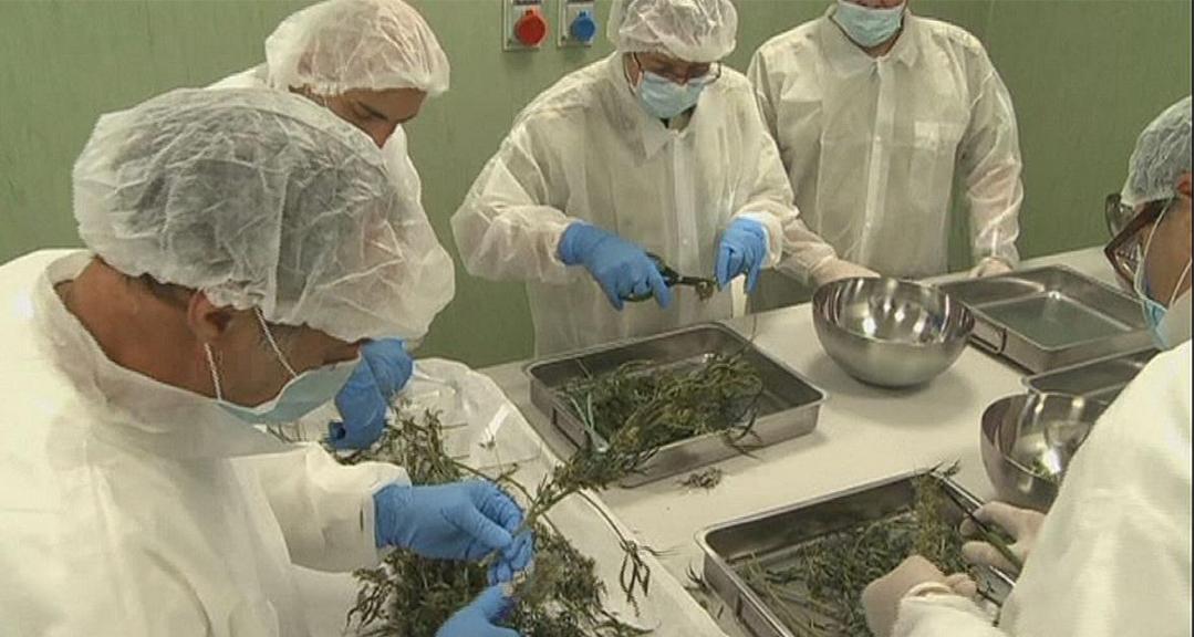 2_Italian military growing weed