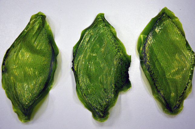 3_man-made biological leaf