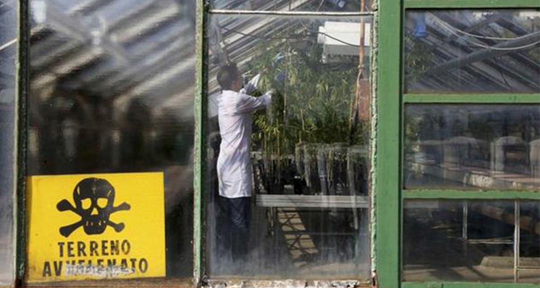 5_Italian military growing weed