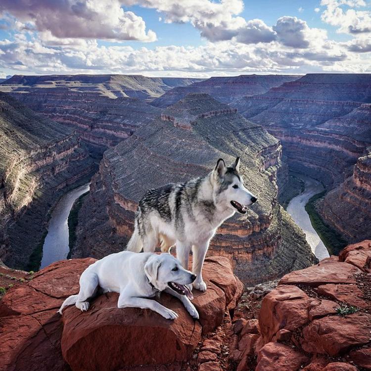 7-wolfDog-2