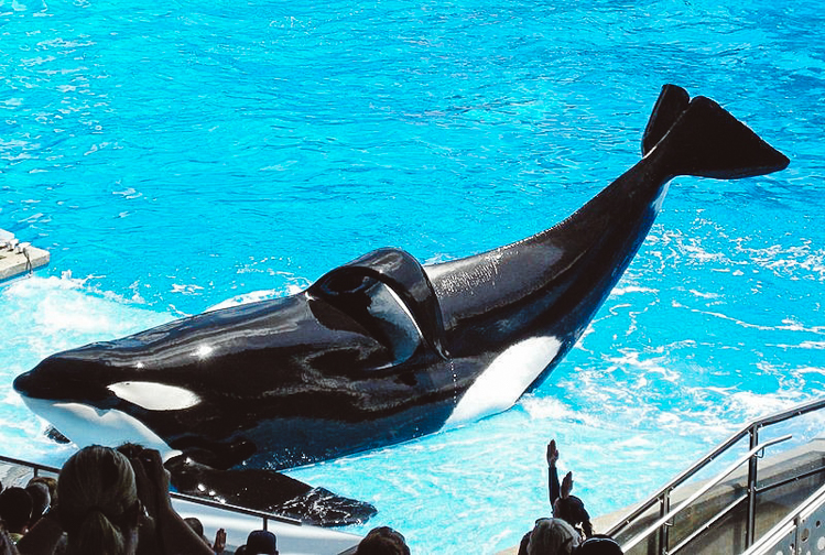 2_California Banning SeaWorld