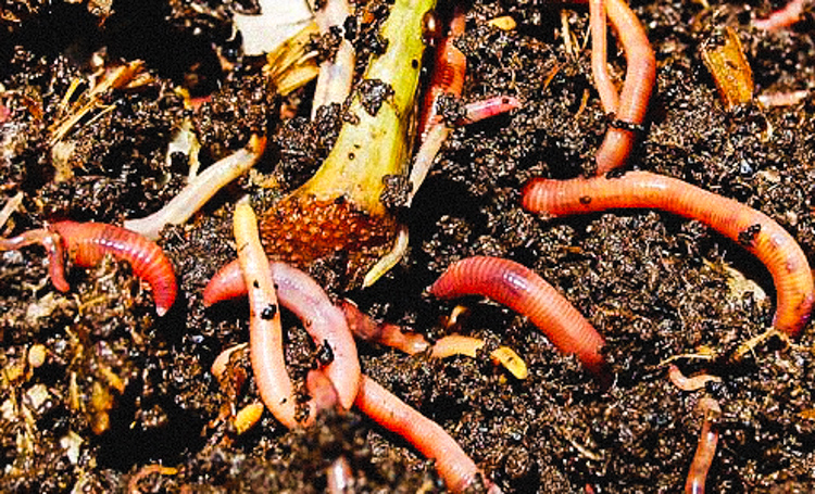 5_earthworms fight climate change