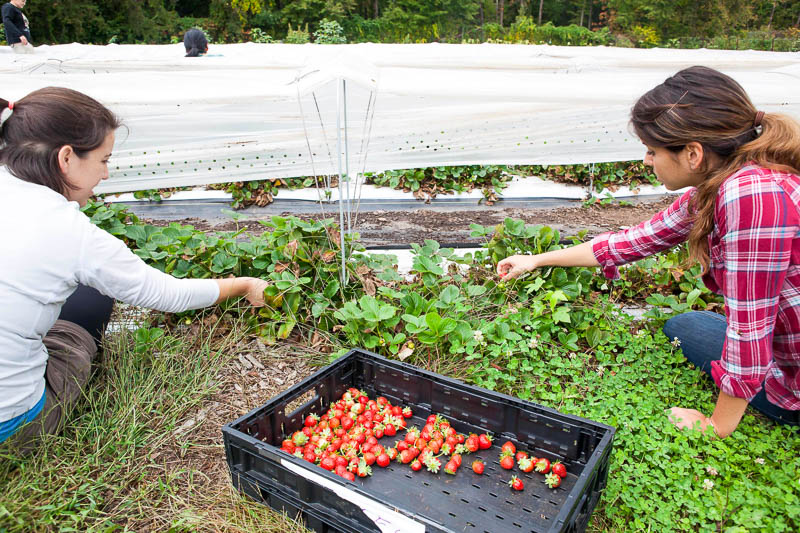 5_eliminating food waste