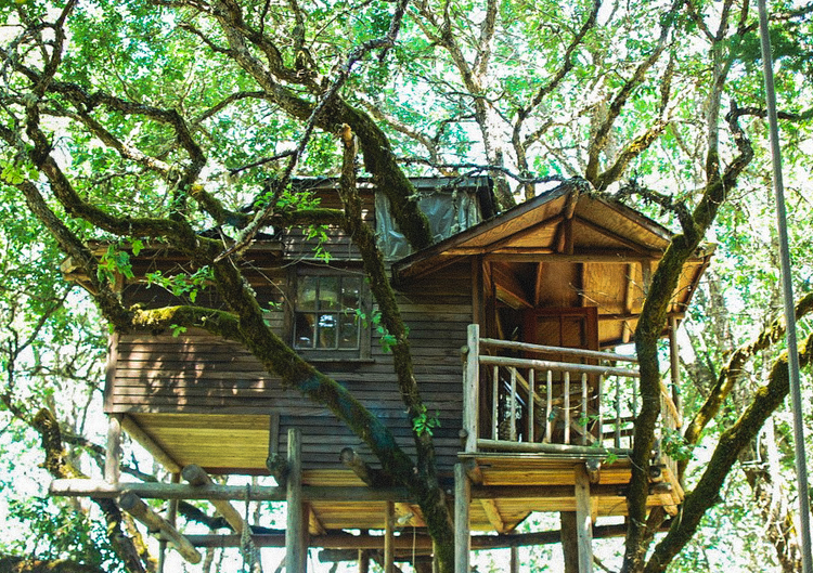 5_treehouse lifestyle