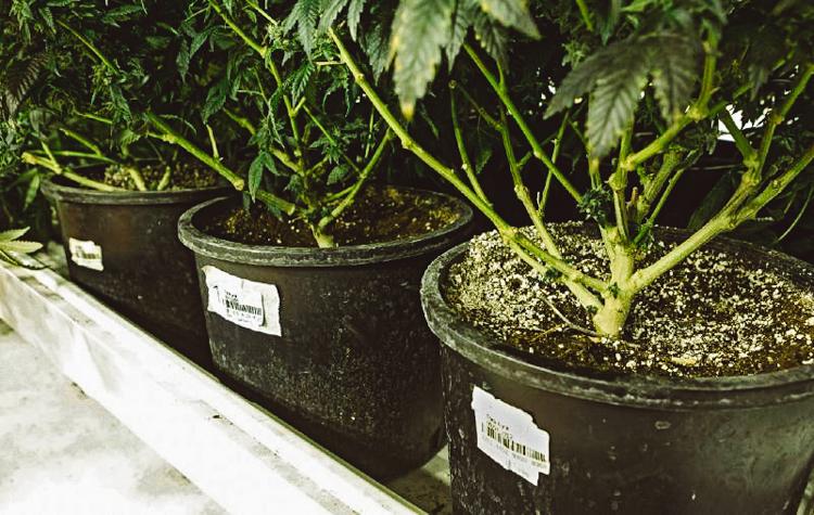 6_America's first marijuana resort
