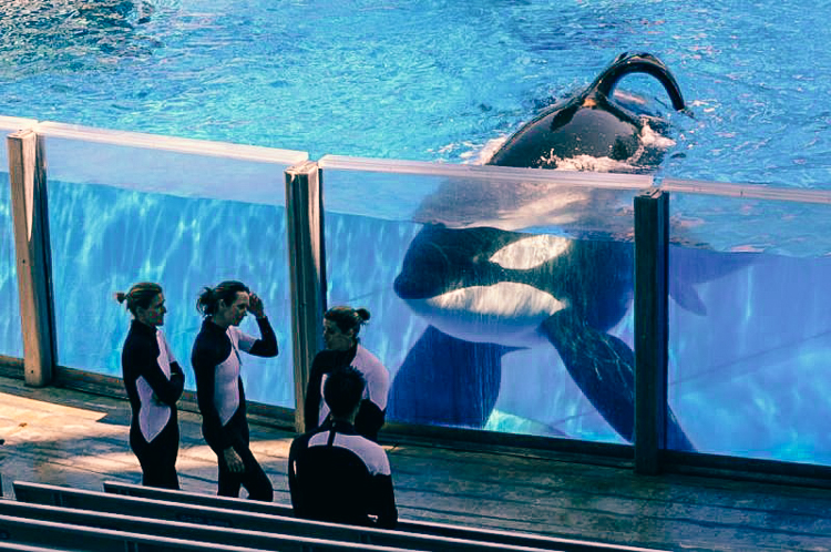 6_California Banning SeaWorld
