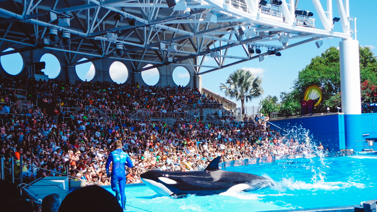 7_California Banning SeaWorld