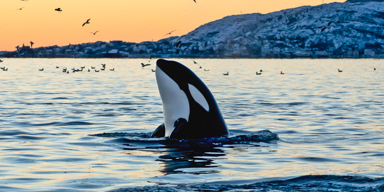 8_California Banning SeaWorld