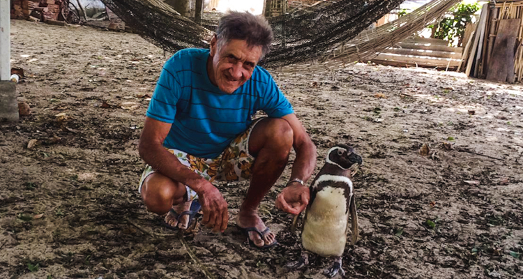 1_penguin and the 70-year-old man
