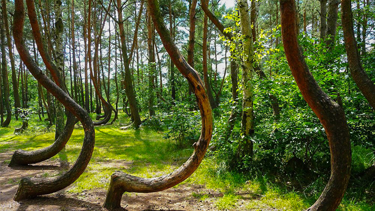 2_Crooked Forest