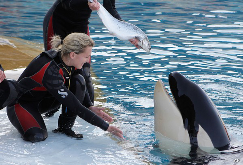 2_SeaWorld-getting-rid-killer-whale-show