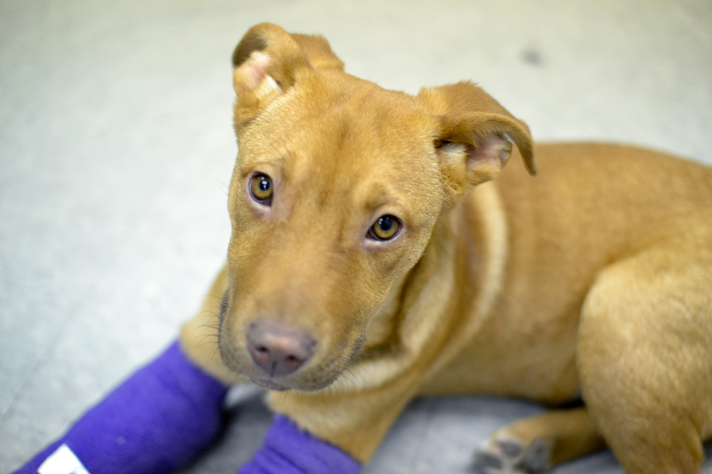 2_Tennessee releasing animal abusers registry