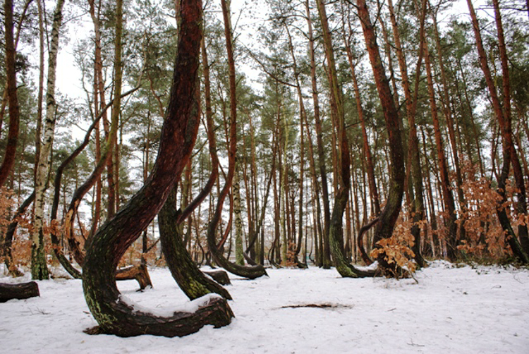 3_Crooked-Forest