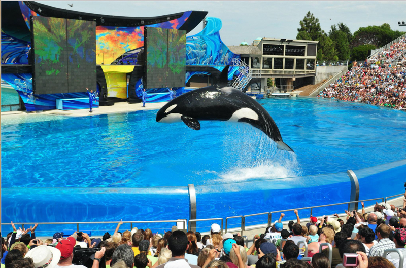 3_SeaWorld getting rid killer whale show