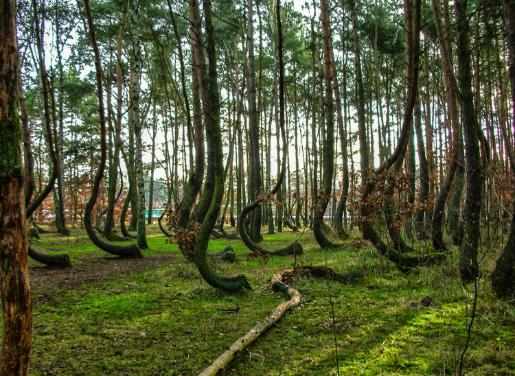 4_Crooked Forest