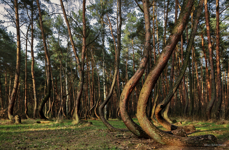 5_Crooked Forest