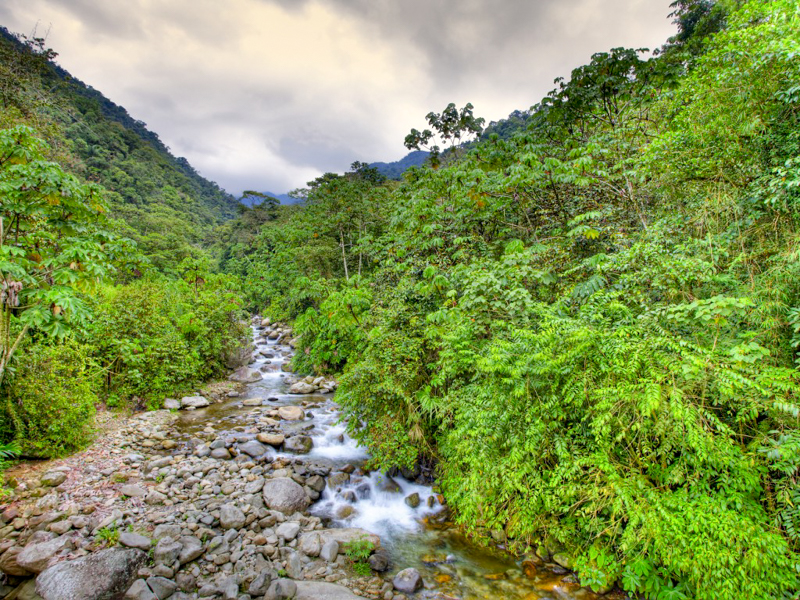 5_Peru is building a jungle conservation