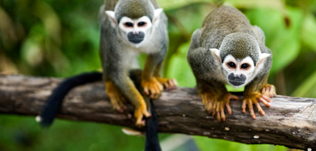 6_Peru is building a jungle conservation