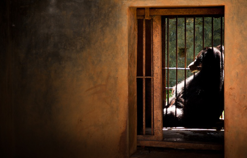 6_zoos are more like animal prisons
