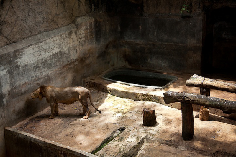 9_zoos are more like animal prisons