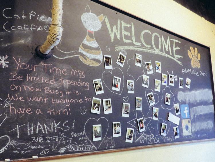 11_Cat Cafes
