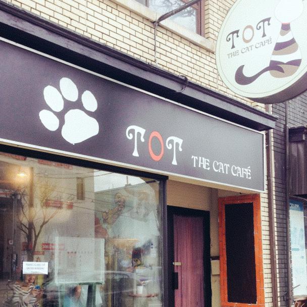 2_Cat Cafes