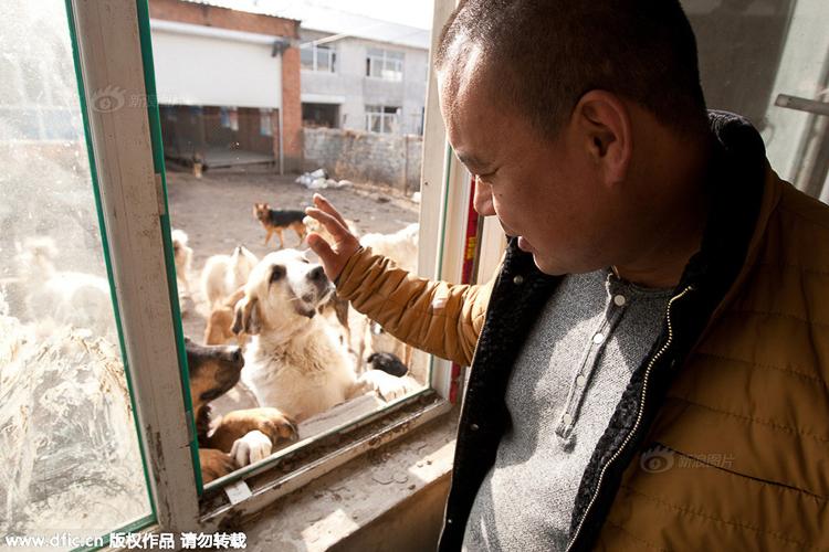 2_Chinese millionaire_Slaughterhouse