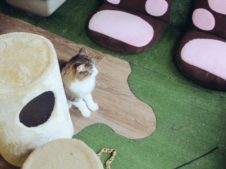 3_Cat Cafes