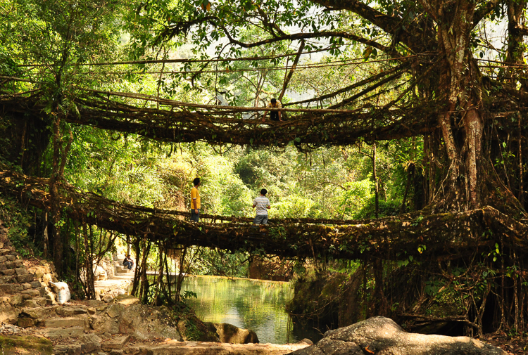 3_India's living root bridges