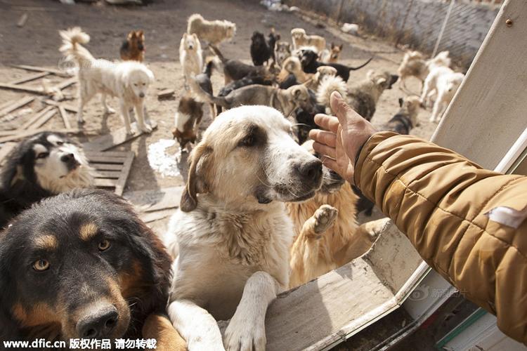 5_Chinese millionaire_Slaughterhouse