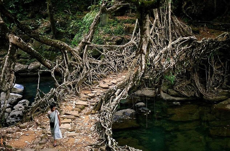 5_India's living root bridges
