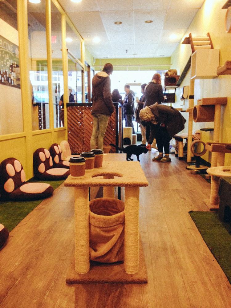 6_Cat Cafes