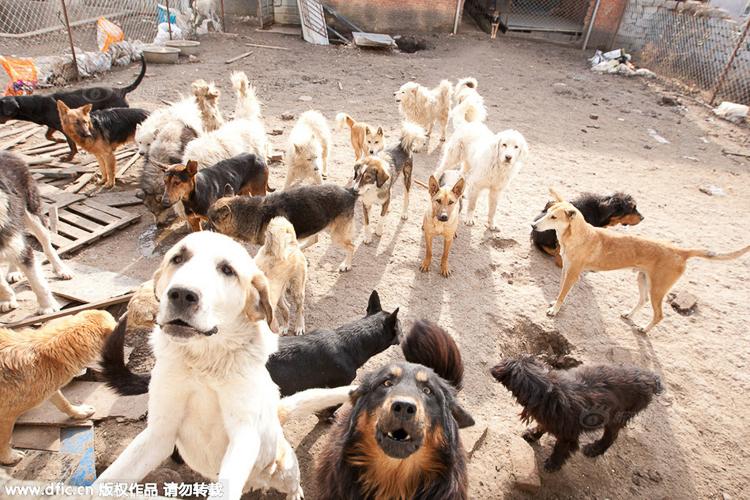 7_Chinese millionaire_Slaughterhouse