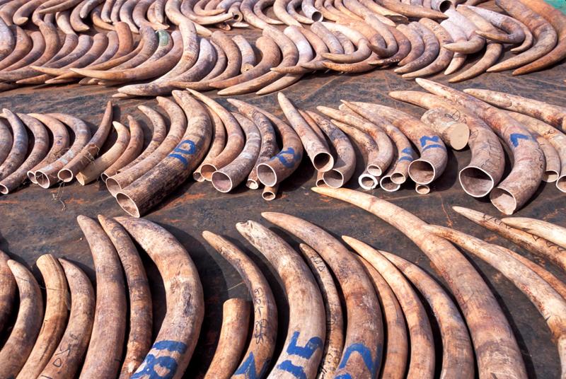 2_Hong Kong will shut down legal ivory trade