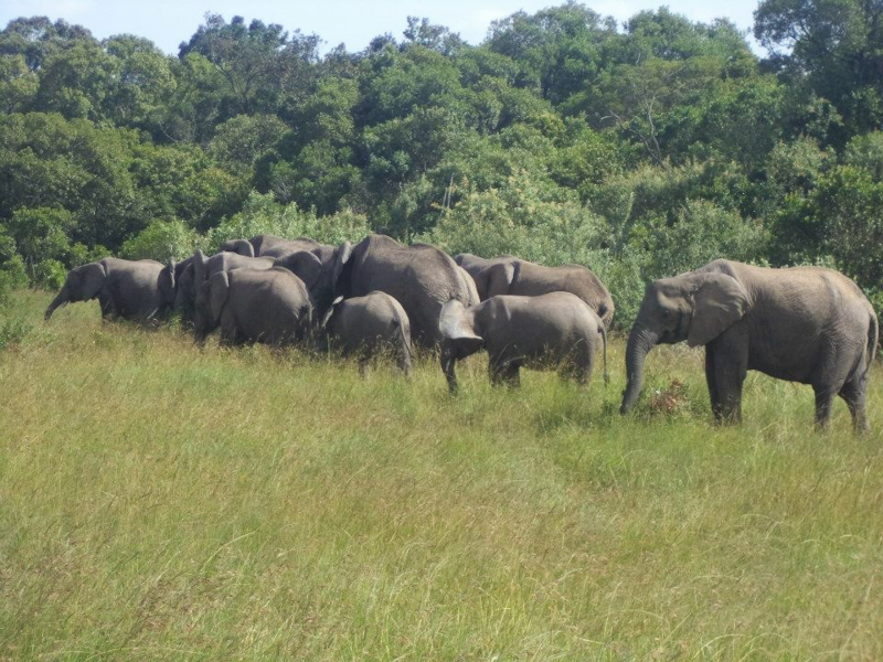5_Hong Kong will shut down legal ivory trade