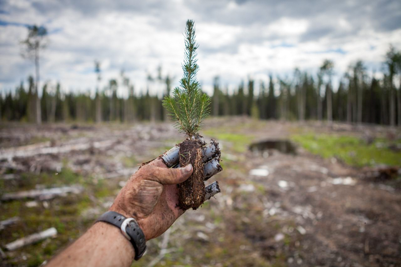 8. tree planting (1 of 1)
