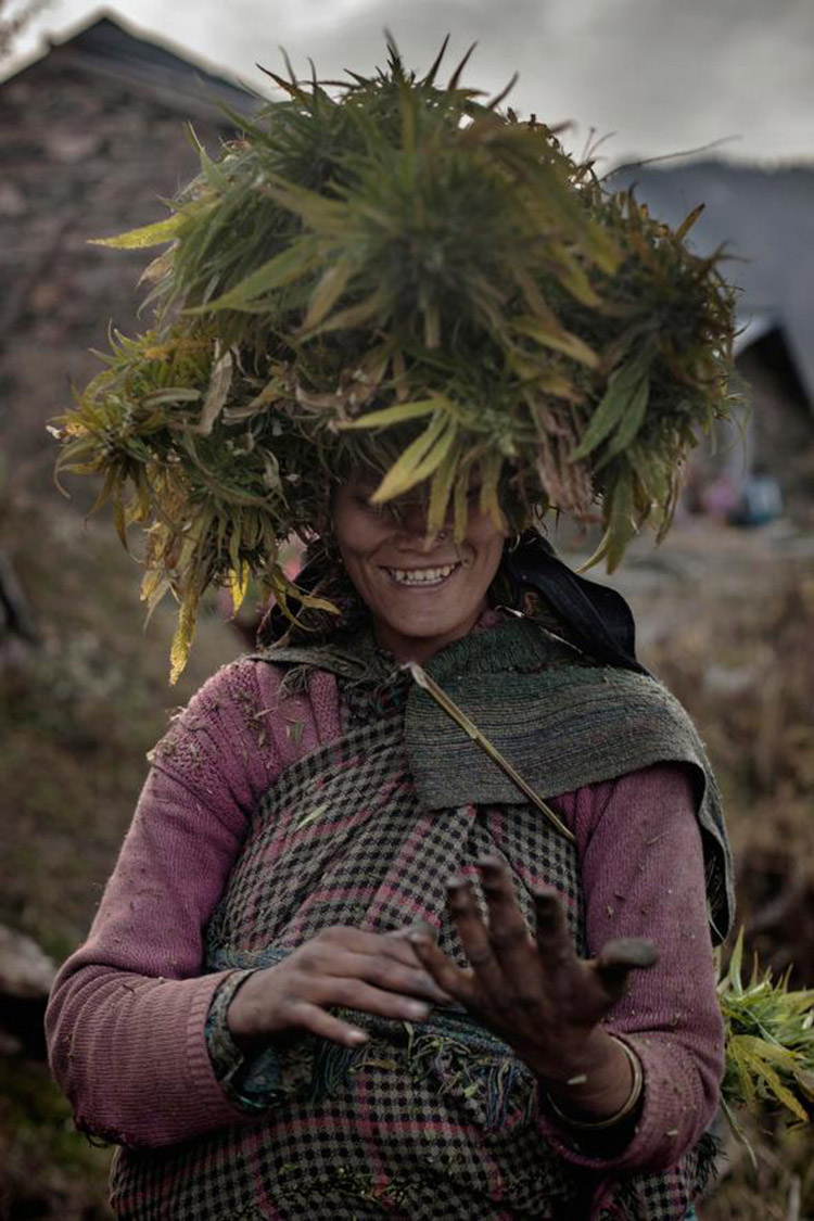 3_Himalayan cannabis village