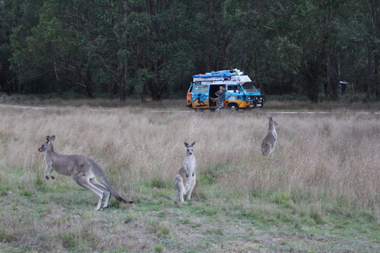 7_couple travelled $8 a day in their VW van