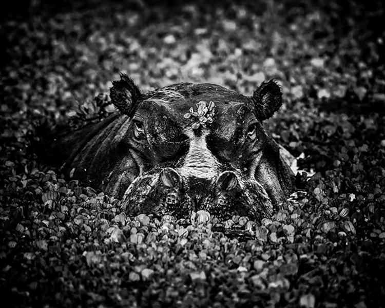 13_Africa's wildlife roaming free