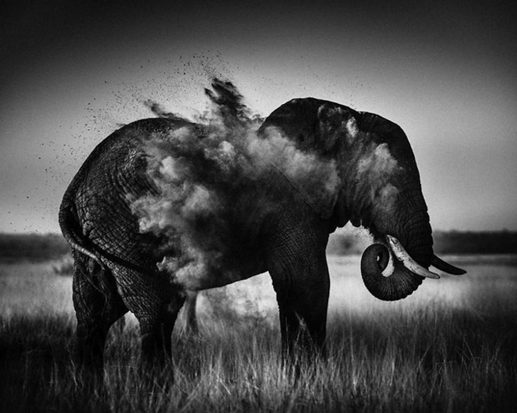 14_Africa's wildlife roaming free