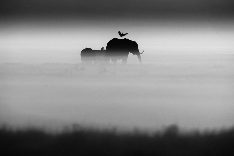 15_Africa's wildlife roaming free