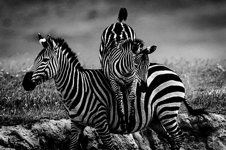 3_Africa's wildlife roaming free