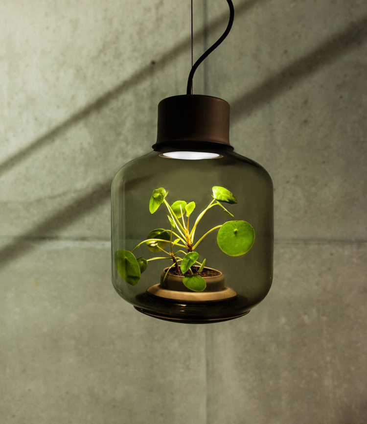 3_glass lamp grows plants in windowless spaces