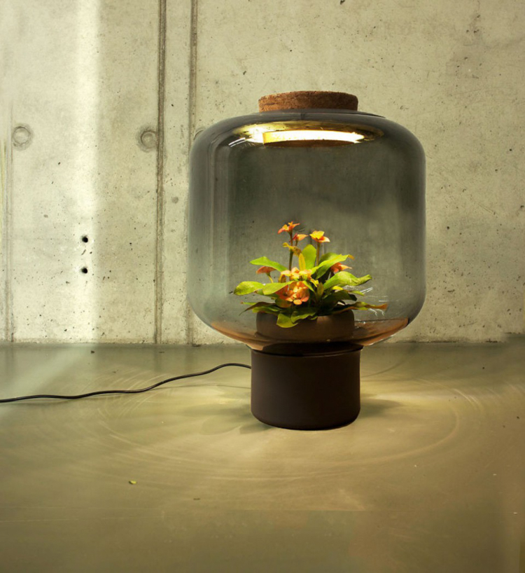 4_glass lamp grows plants in windowless spaces